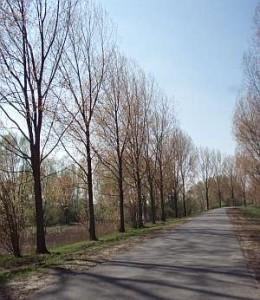 P4238415.jpg-bomenrijklein